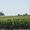 Луговой мотылек - защита посевов от его гусеницы вертолетом самолетом #908546